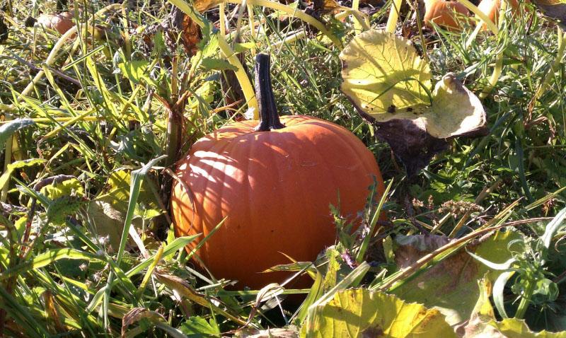 Winding Path Gardens Pumpkin Patch